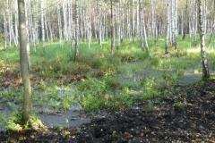 mokřiny a břízový les
