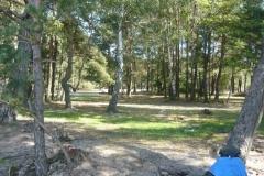 stromy okolo jezera
