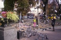 dítě krmící holuby